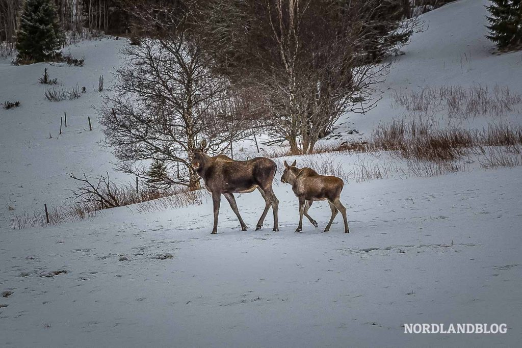 Winterwunderland Norwegen (Nordlandblog)
